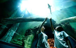 visitar acuario de zaragoza